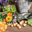 Już za kilka tygodni nadejdzie pracowity okres dla wszystkich ogrodników